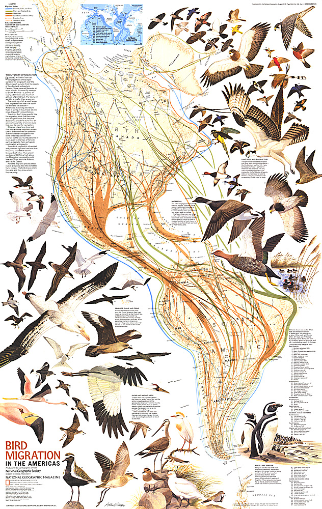 Migration in the Americas Map