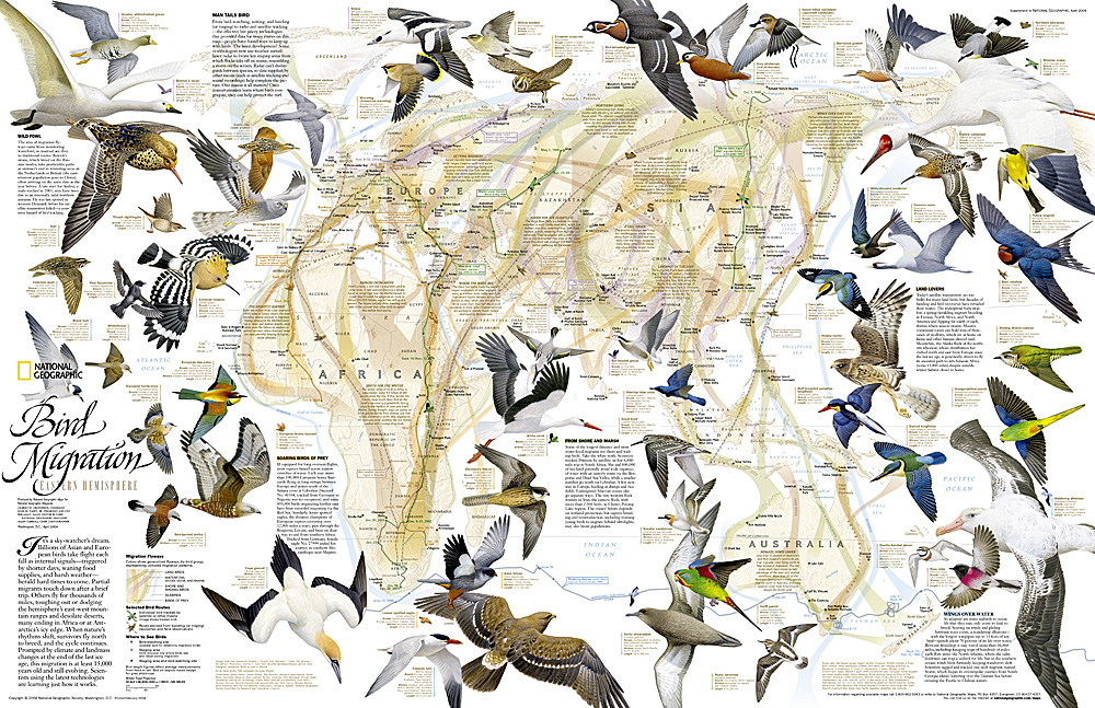 Bird Migration Eastern Hemisphere Map - Weather patterns map us and bird migration