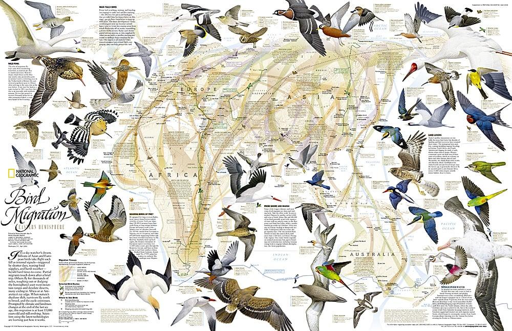 Migration Eastern Hemisphere Map