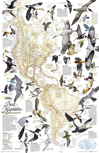 Bird Migration, Western Hemisphere [Laminated]