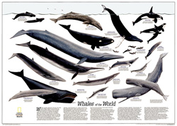 Whales of the World