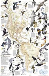 Bird Migration, Western Hemisphere